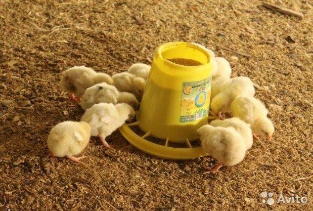 Кормление молодняка птицы с первой недели жизни