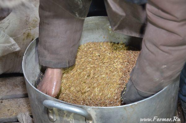 Зачем в состав зерносмеси для несушек добавляют подсолнечное масло?