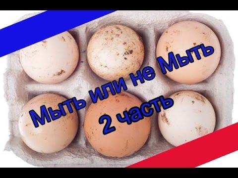 Нужно ли мыть куриные яйца перед закладкой их в инкубатор