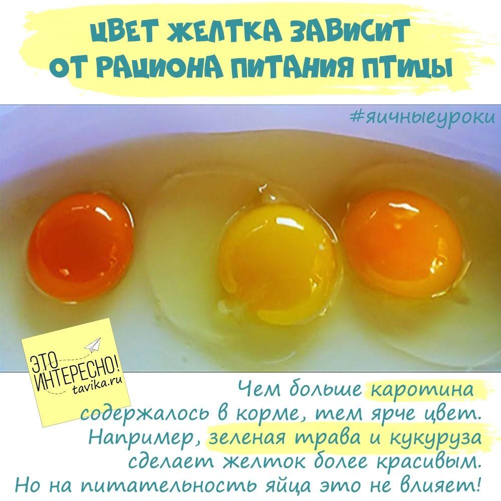 Цвет желтка и скорлупы куриных яиц от чего зависит?