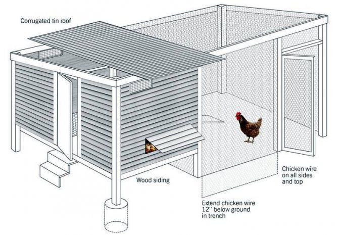 Как правильно расположить курятник на дачном участке