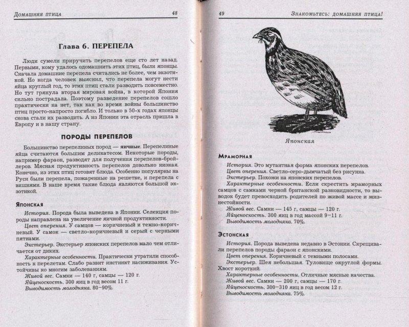 Мясные породы перепелов– фото, описание, показатели продуктивности