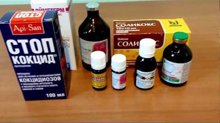 Симптомы и способы лечения кокцидиоза у бройлеров