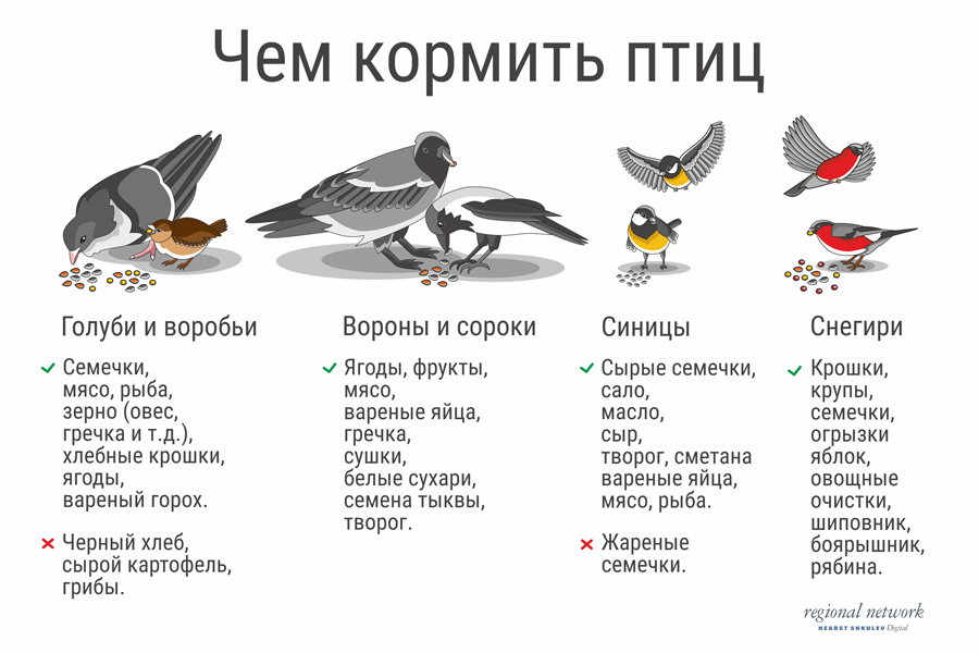 Чем лучше кормить голубей?