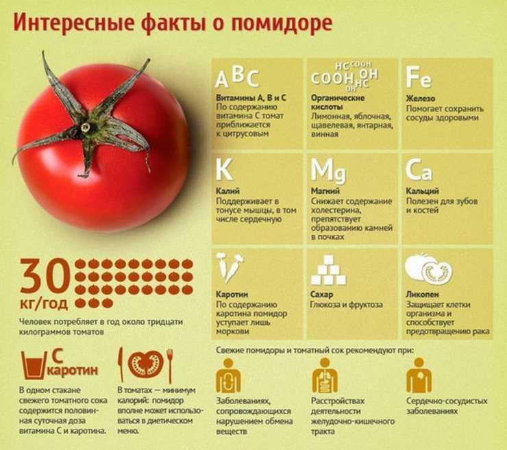 Можно ли давать курам помидоры (в том числе, зеленые) и помидорную ботву?