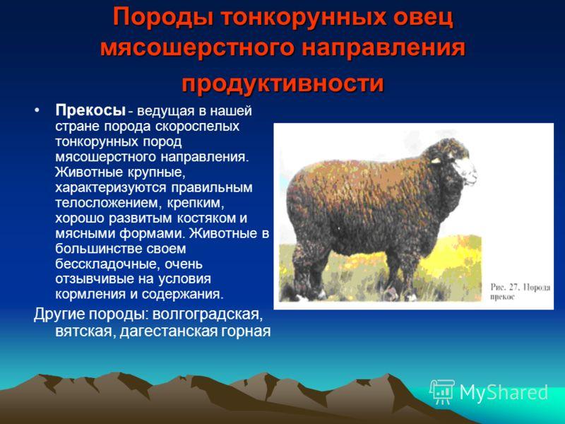 Гилянская - мясо-яичная порода кур. Описание, характеристики, выращивание, кормление и правила инкубации