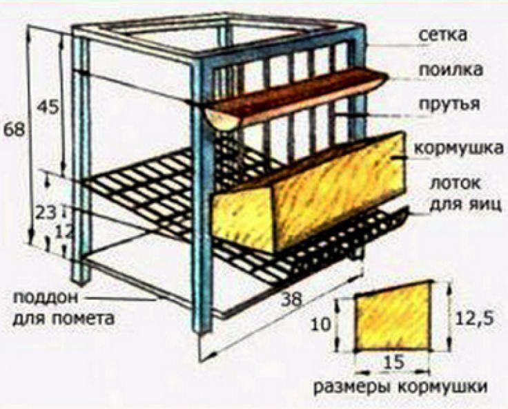 Какая площадь нужна для кур-несушек: сколько птиц должно приходиться на 1 кв. метр курятника?