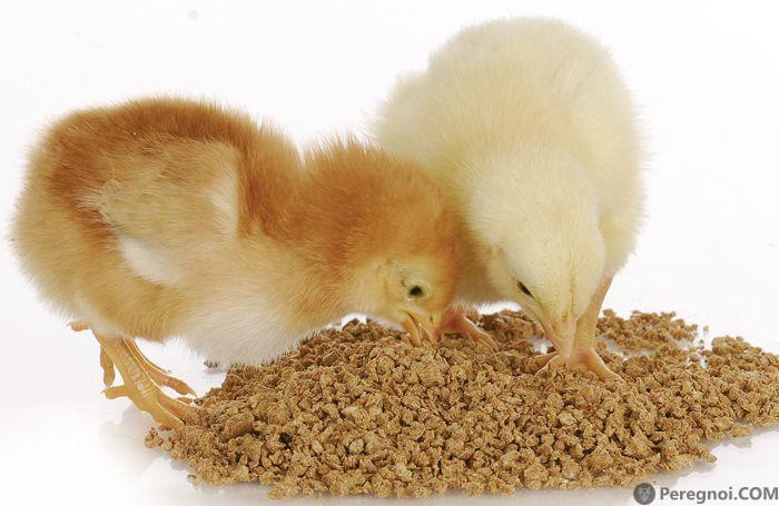 2-3 неделя жизни цыплят – правила ухода