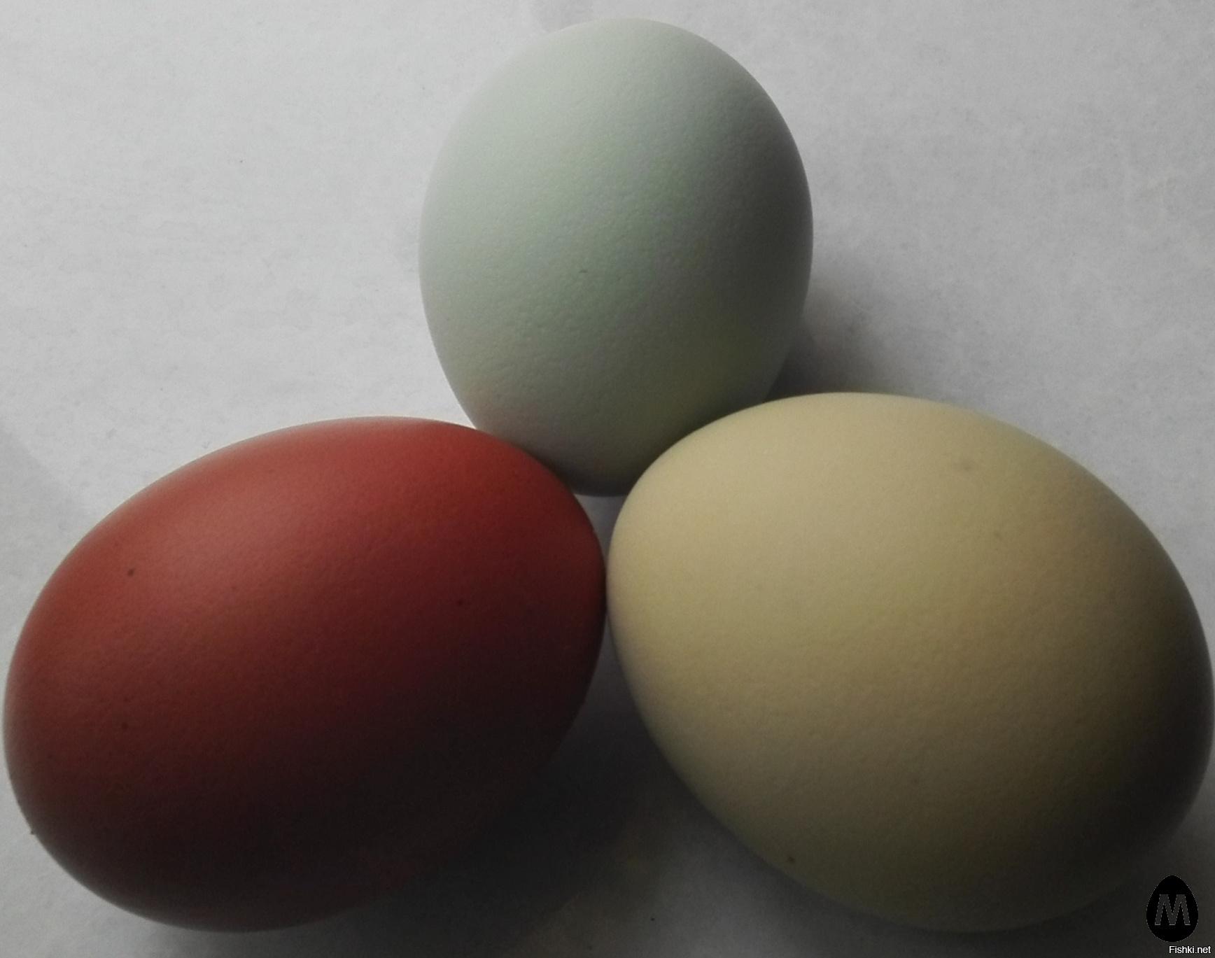 Какие куры несут черные яйца? Порода, особенности содержания, кормления и ухода