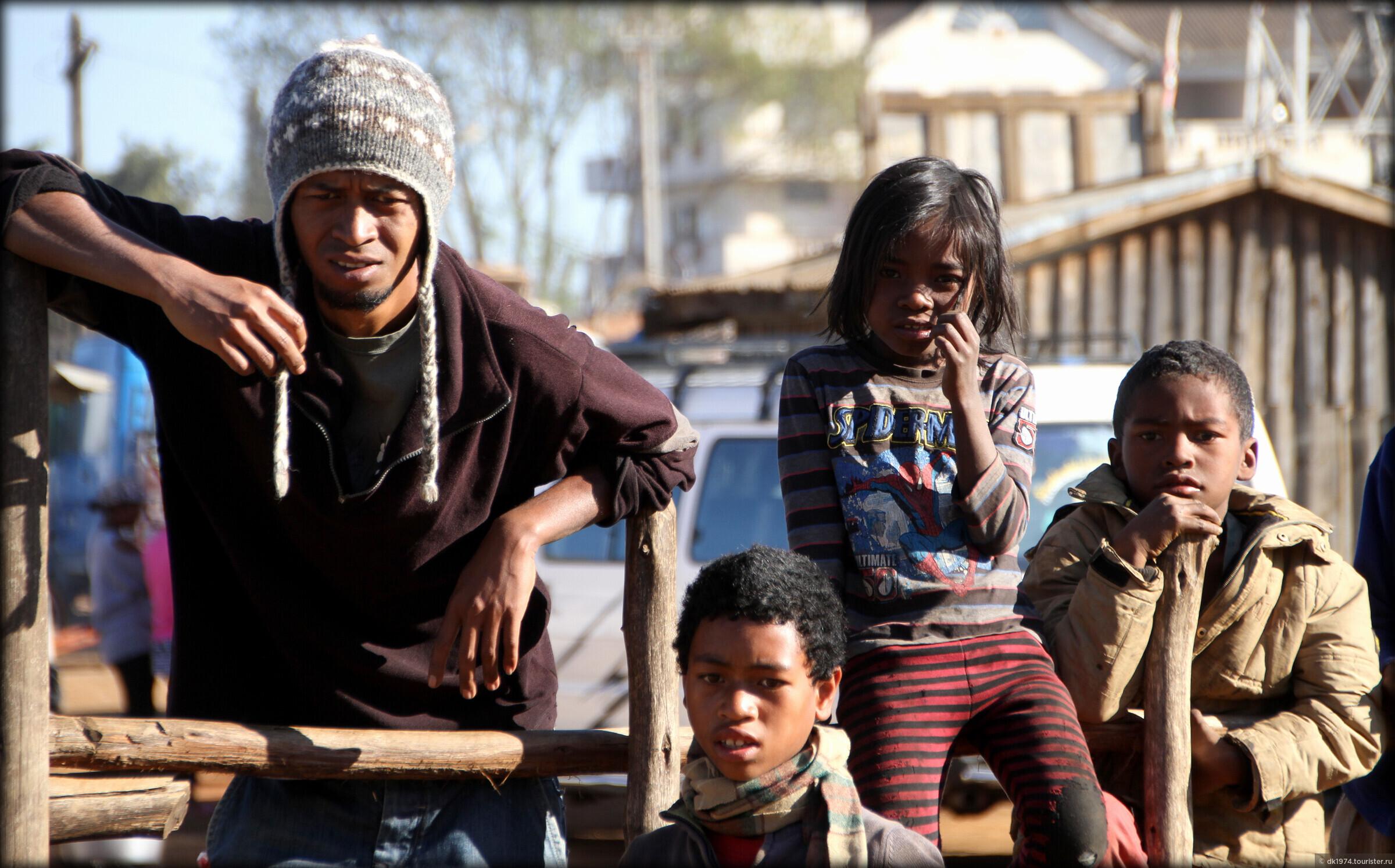 Мадагаскарская - бойцовая порода кур. Описание, содержание и уход, разведение, кормление, отзывы