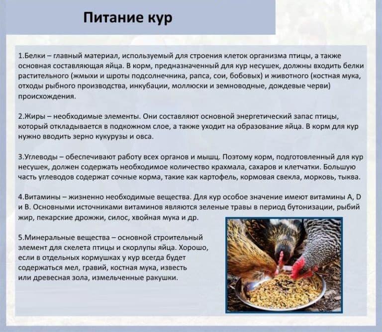 Увеличиваем яйценоскость кур несушек: правильное кормление и содержание