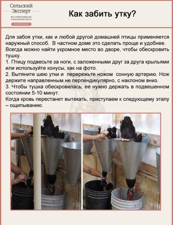 Как правильно ощипать утку в домашних условиях