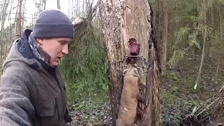 Как избавиться от хорька в курятнике: как поймать хищника и защитить птиц? Капкан, ловушка и другие способы