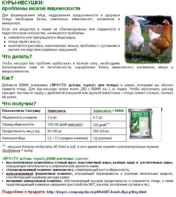 Яйценоскость кур несушек – определить и правильно кормить