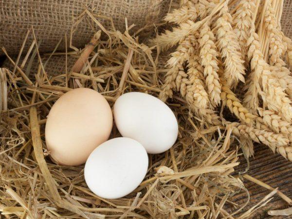 Почему курица несет яйца без скорлупы?