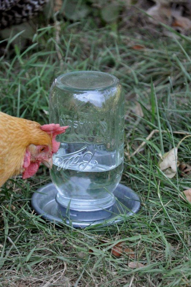Технологии изготовления различных поилок для цыплят