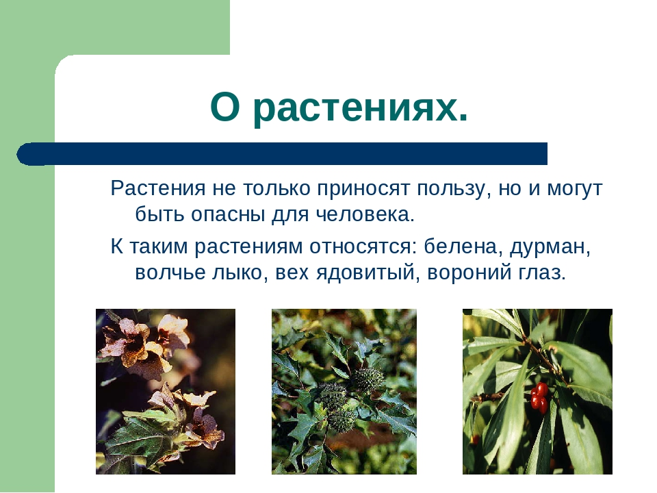 Кормление кур травой – вредные и полезные растения