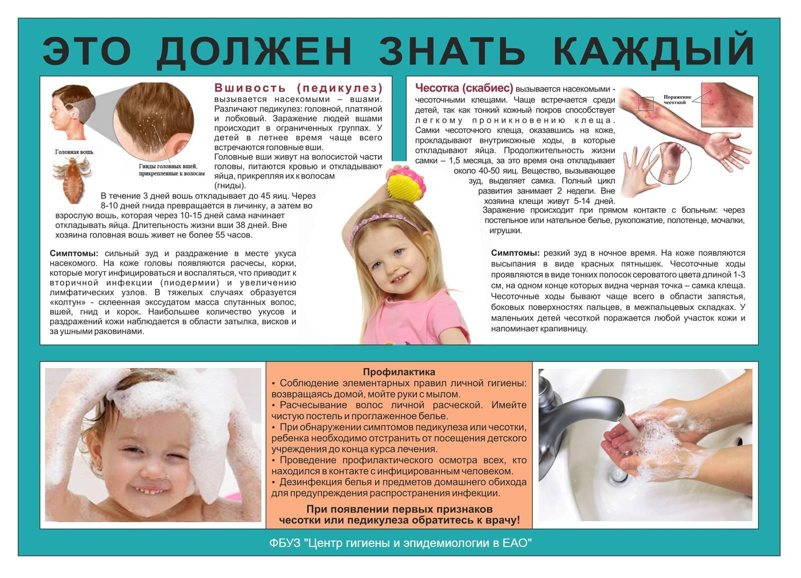Куриные вши: как от них избавиться и чем обработать курятник? Препараты, лечение и меры профилактики
