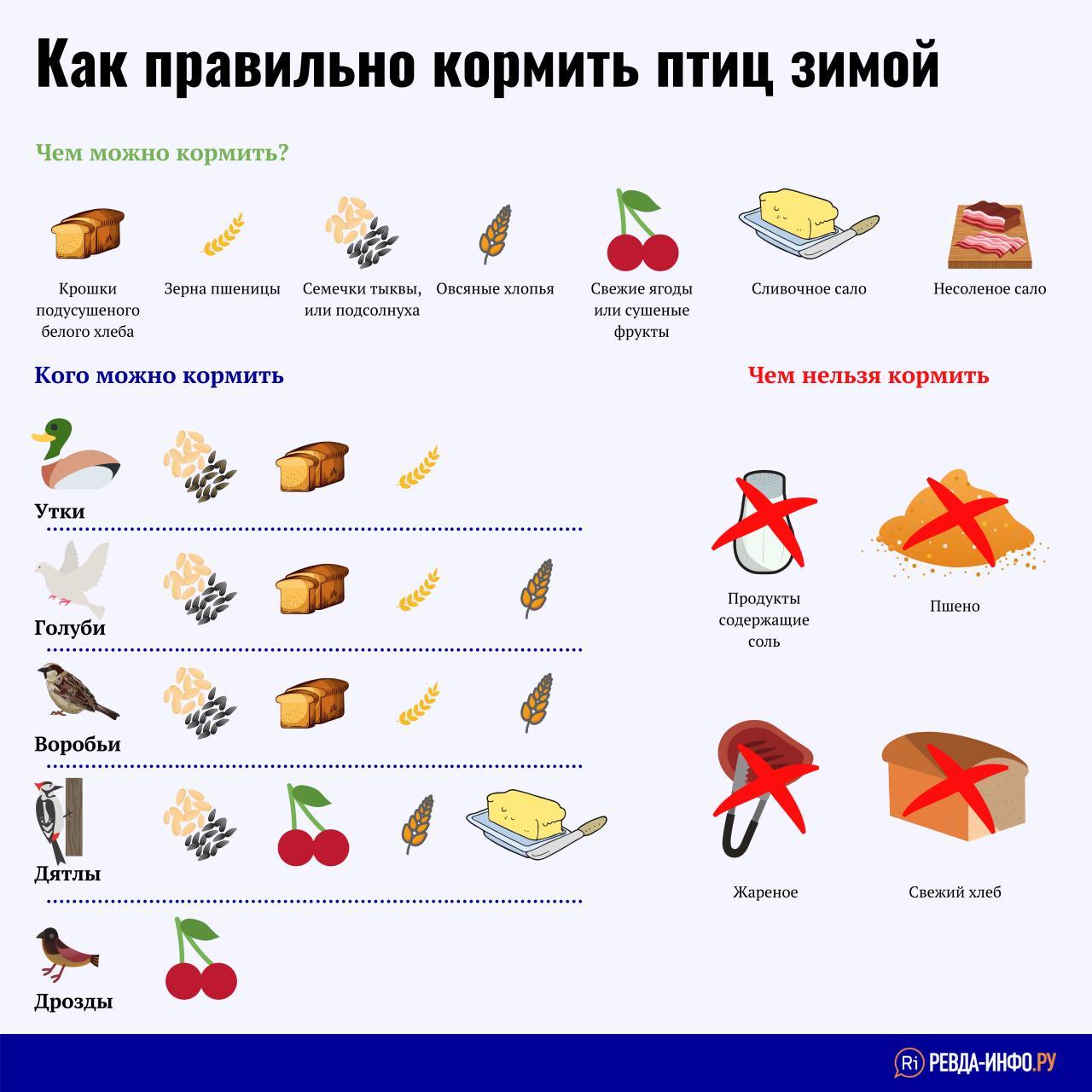 Можно ли кормить уток белым и черным хлебом