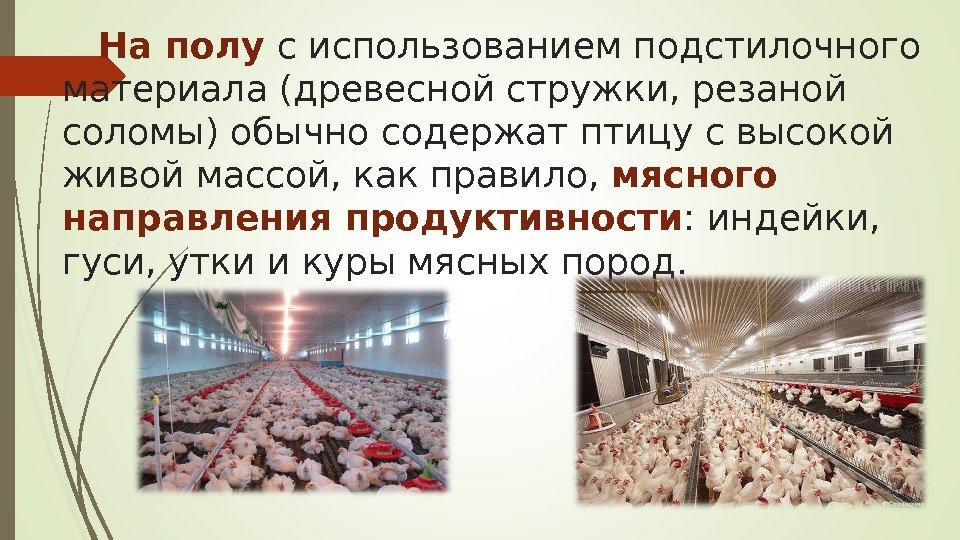 Разведение уток и продажа утиного мяса, как бизнес – выгодно или нет
