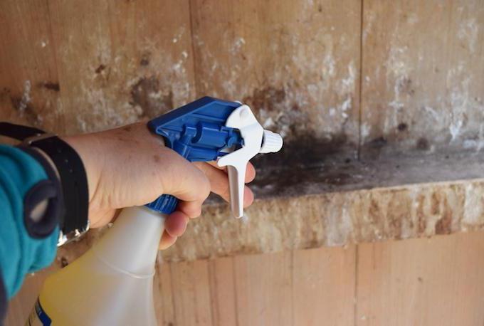 Как правильно проводить дезинфекцию курятника