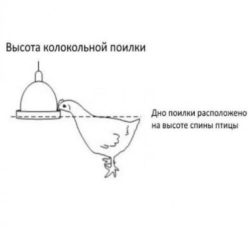 Поилка для гусей своими руками – пошаговое описание процесса
