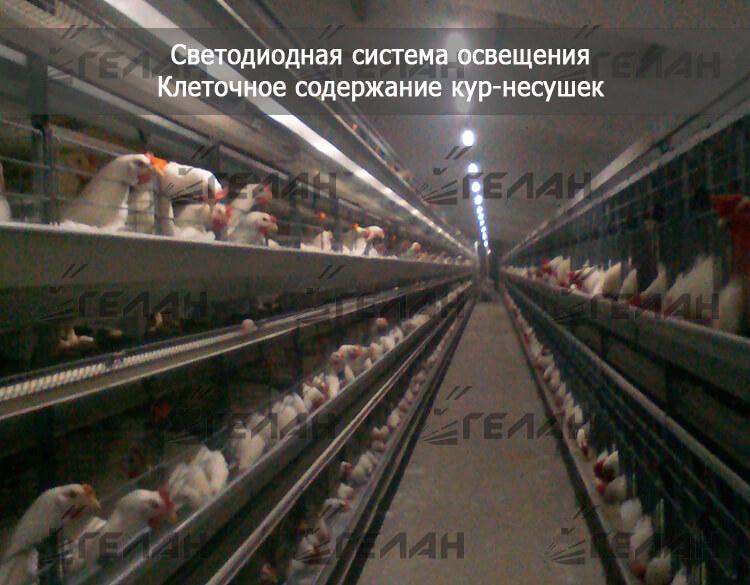 Содержание кур в домашних условиях для начинающих: уход, оборудование, кормление
