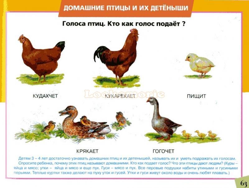 Что нужно знать о линьке у птиц