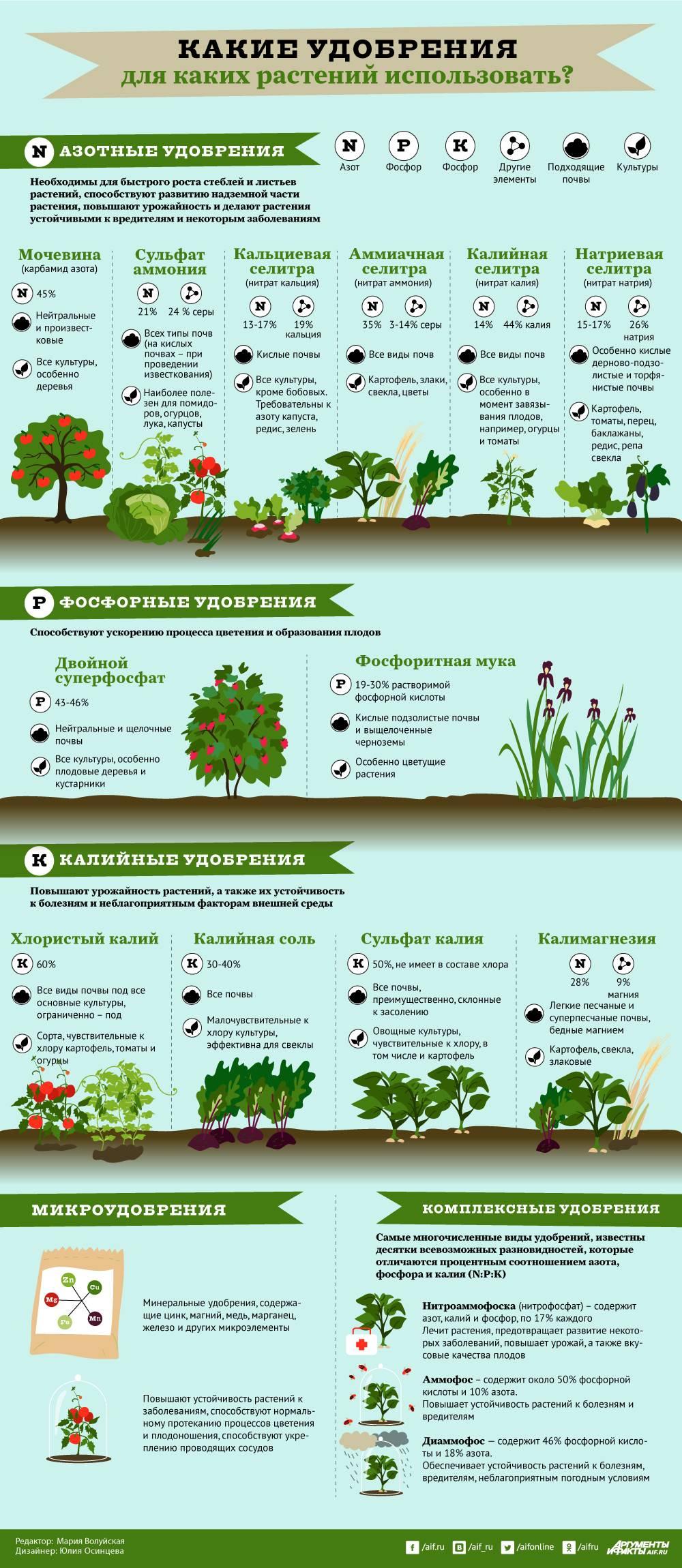 Какие полезные травы для кур посадить на участке?
