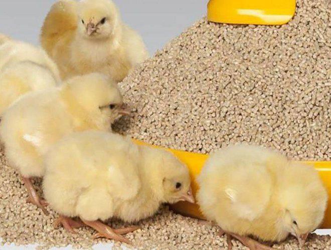 Секреты эффективного витаминного питания цыплят