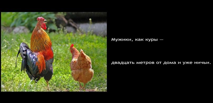 Как курица у соседки участок охраняла