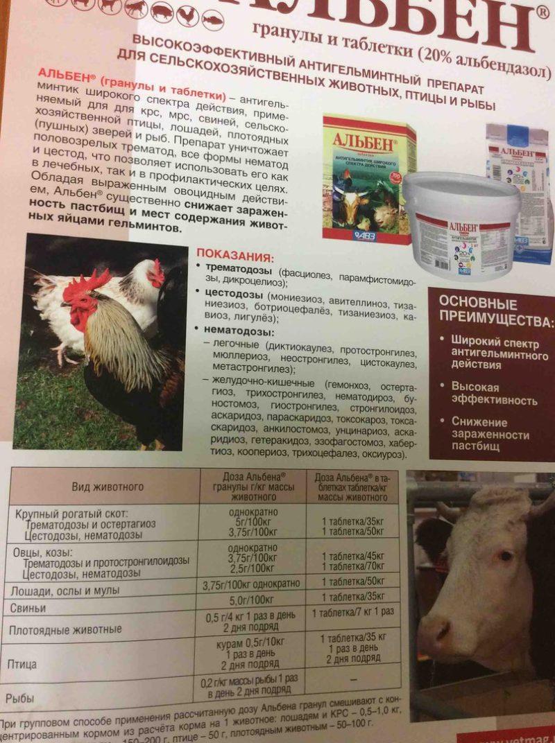 Левамизол для кур: инструкция по применению и дозировка