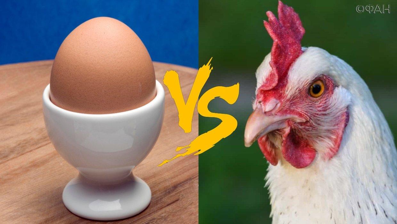 Почему куры поют песню, когда снесут яйцо?