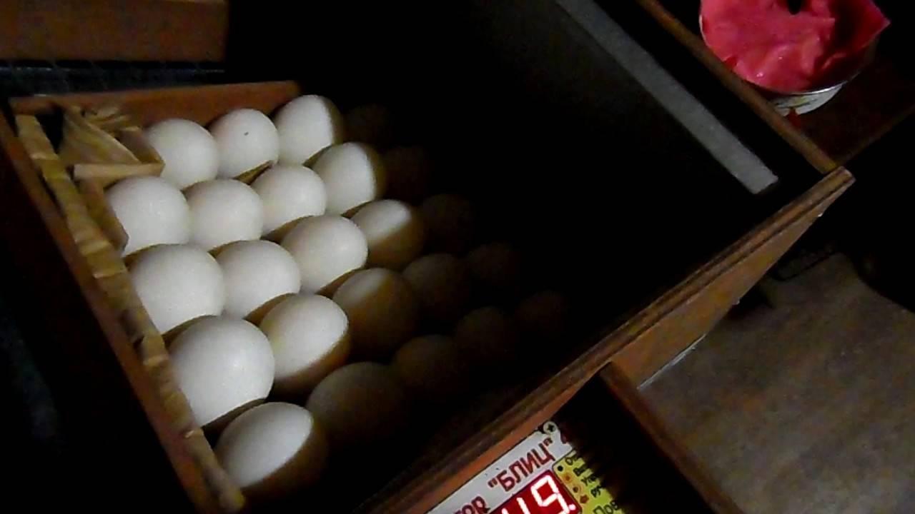 Как закладывать утиные яйца в инкубатор?