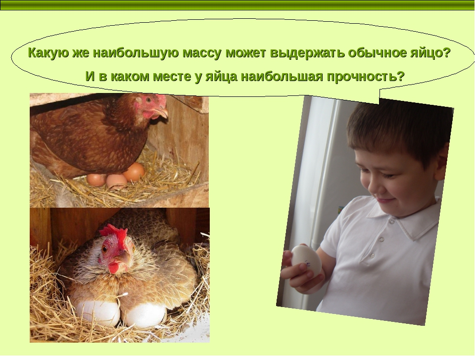 Форма яйца и пол цыпленка