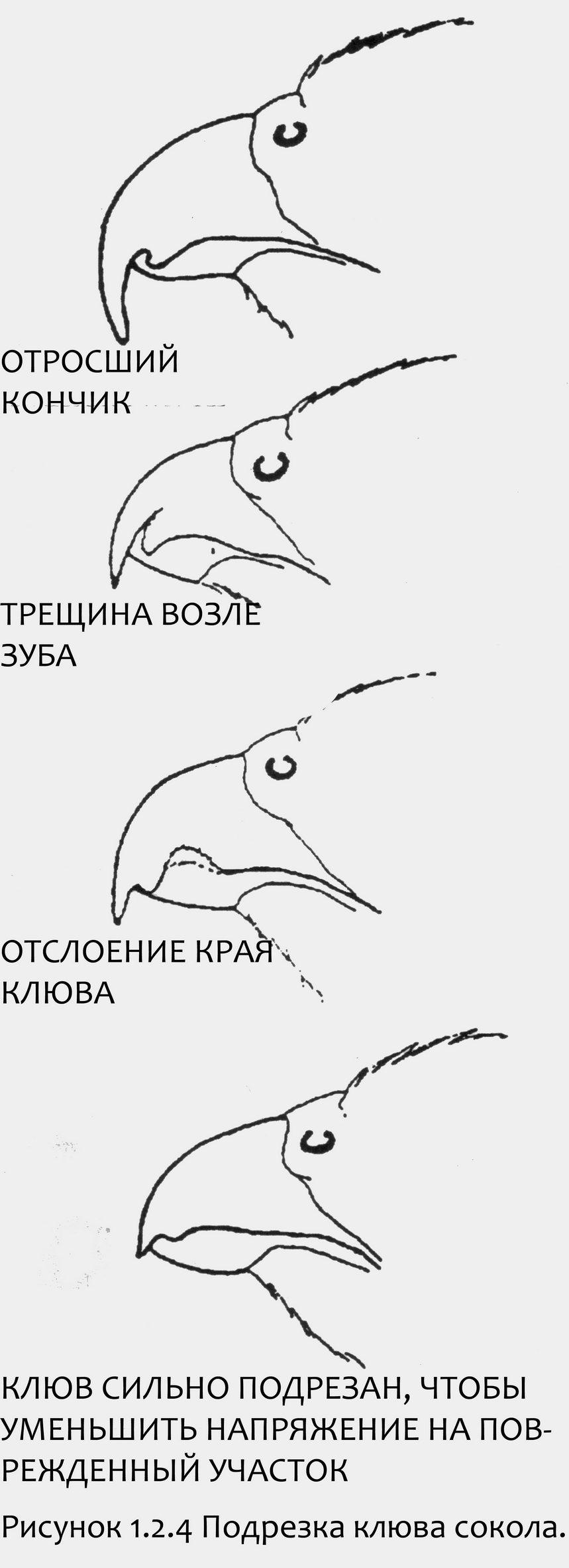 Как подстричь куриный клюв и чем лучше обрезать