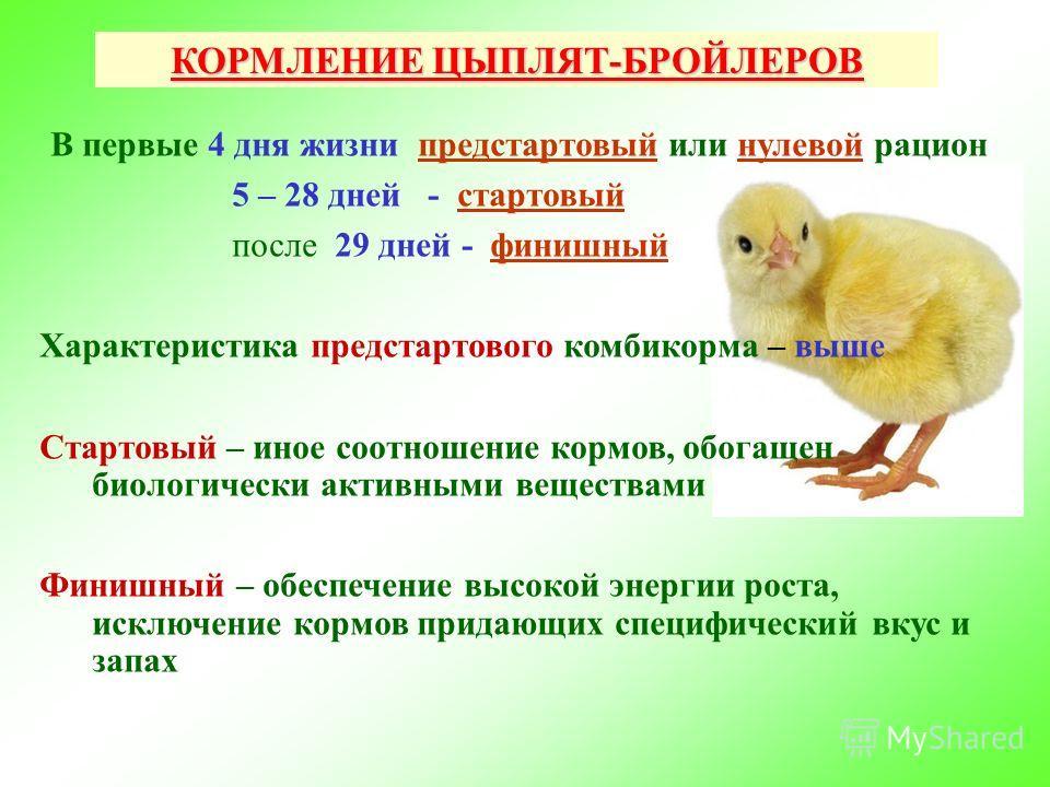 Как и чем кормить бройлерных цыплят в домашних условиях