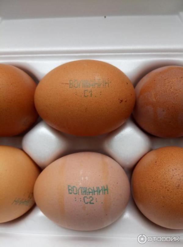 Куриное яйцо с сюрпризом весом в 176 грамм