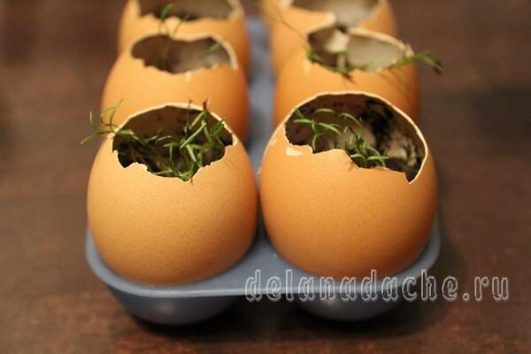 Как проращивать семена в яичной скорлупе
