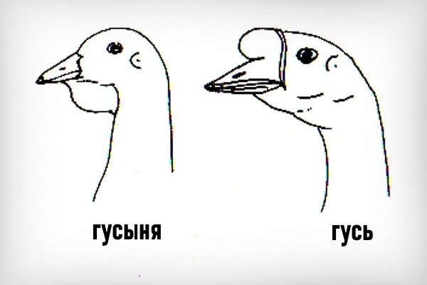 Основные различия гусыни и гусака