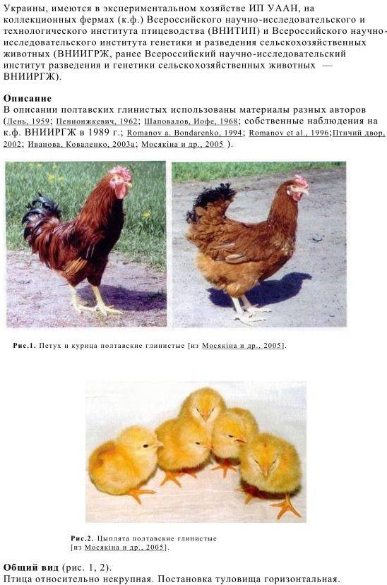 Продуктивные показатели Полтавской глинистой породы кур