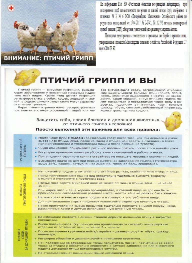 Вакцинация цыплят инструкция и прививки бройлеров