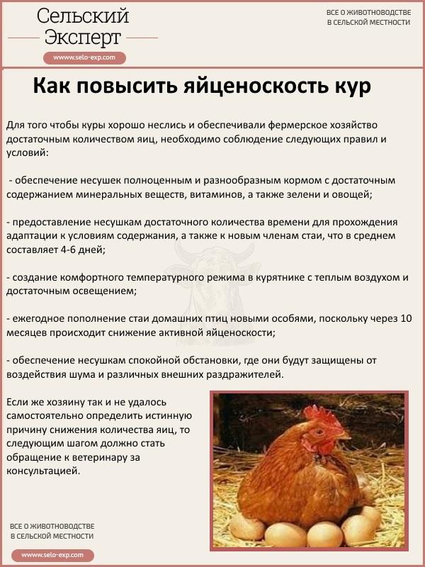 Можно ли взрослым бройлерам и цыплятам давать кабачки. Есть ли польза от кабачков для кур, как и в каком возрасте начинать кормить