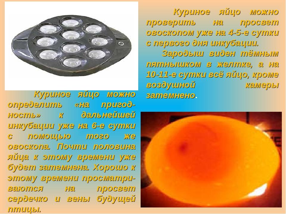 Почему инкубация яиц в домашних условиях очень выгодное дело