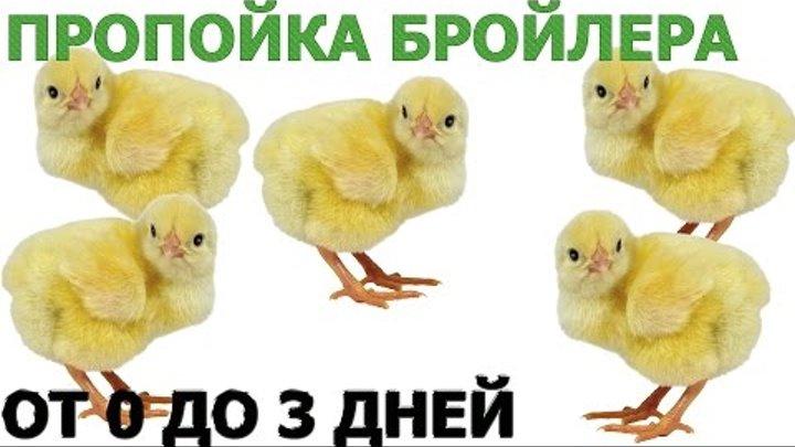 Пропойка цыплят бройлеров с первых дней жизни