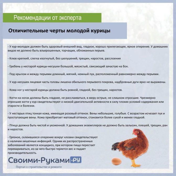 Зачем нужны занавески для куриных гнезд и можно ли обойтись без шторок?