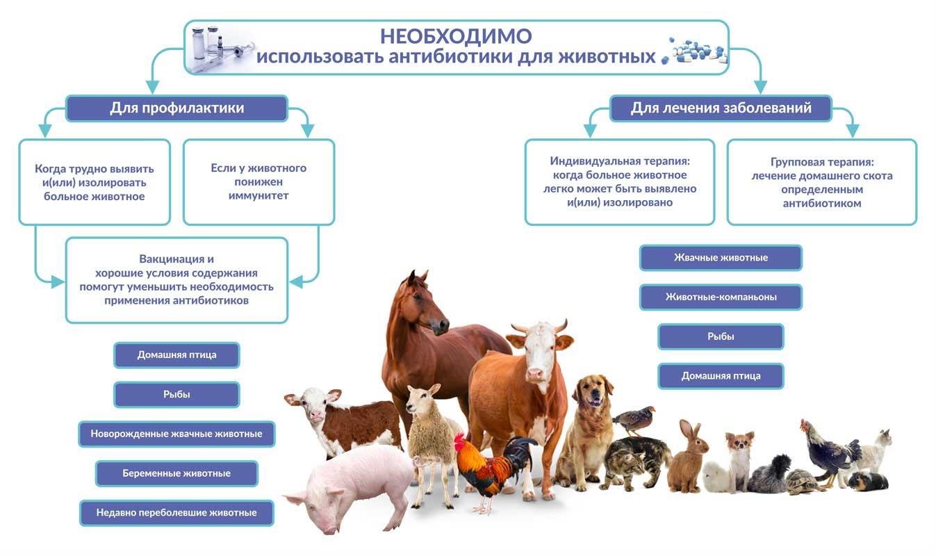 Амоксигард Feed - инструкция по применению препарата для лечения кур, цыплят и свиней
