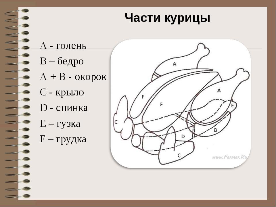 Анатомическое строение курицы: скелет птицы и устройство внутренних систем, правила разделки тушки