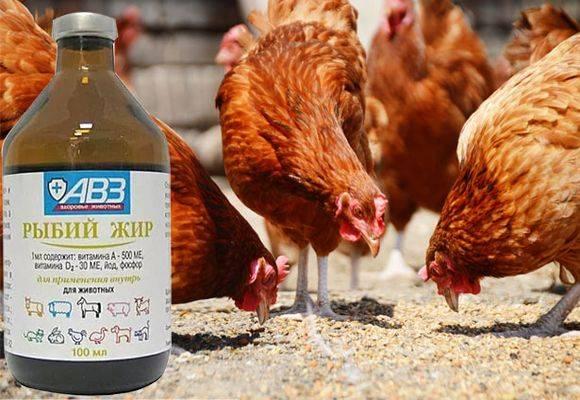 Рыбий жир для бройлеров, цыплят и несушек. Как правильно давать, дозировка