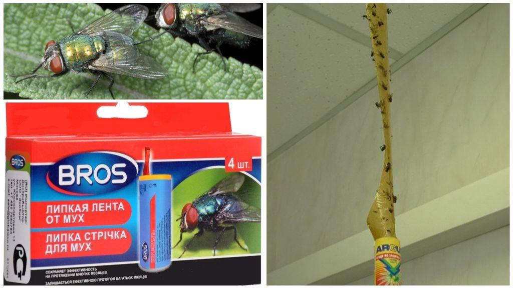 Как избавиться от мух в курятнике: чем они опасны для птиц? Лучшие препараты и народные методы